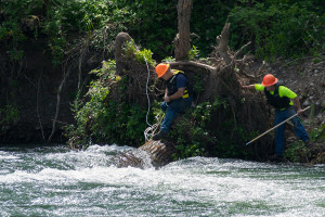 root wad removal on Willamette river