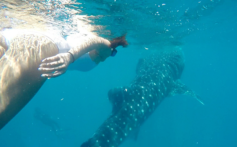 SWIMMING WITH THE WHALE SHARKS IN OSLOB, CEBU