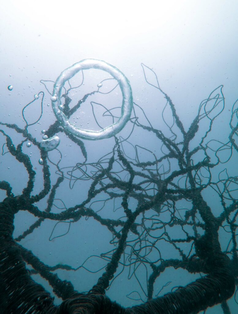 Underwater Halo - Tree of Life