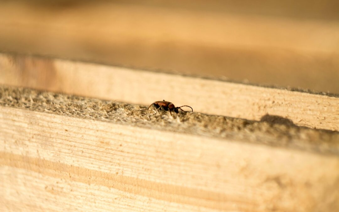 Who Can Perform Pest Inspections in the State of Ohio?