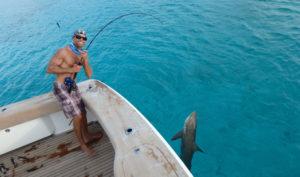 cory reeling in reef shark