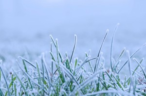 winter-84723_1920