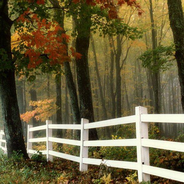 Fall-Foliage-0720-1170x596-1-1170x590