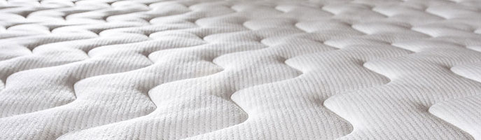 Bedbug Control