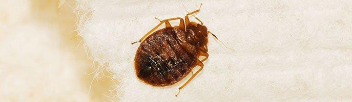 Experienced Bedbug Exterminators