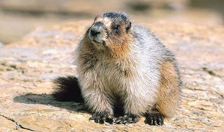 Professional Help for Getting Rid of Squirrels and Groundhogs