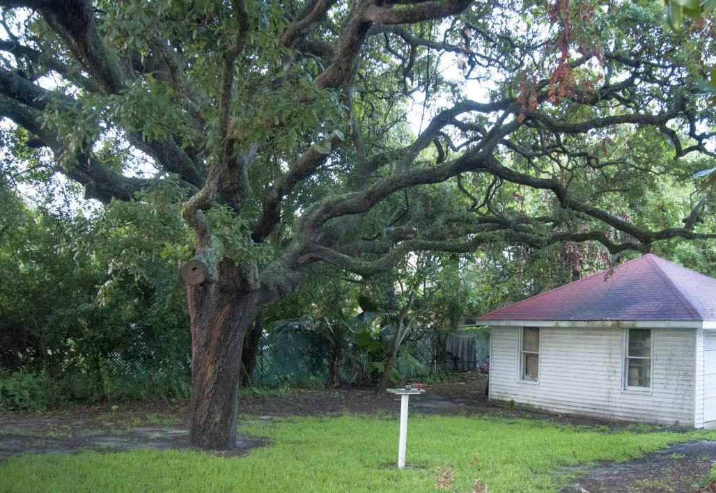 Peabody House Backyard
