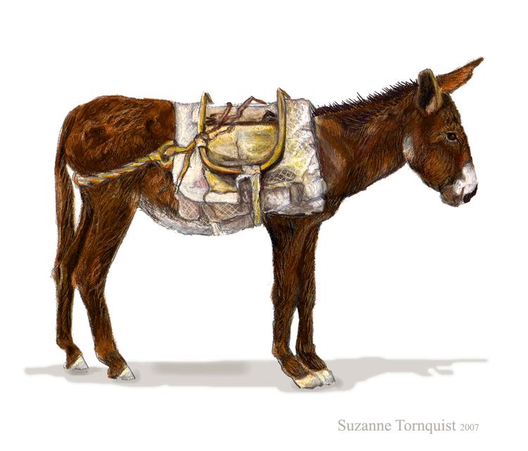 5x5-donkey-web
