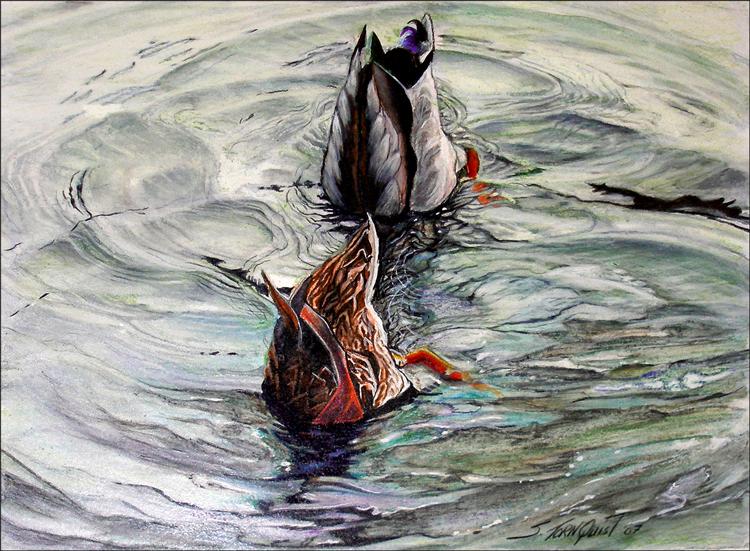 ducks-diving-web