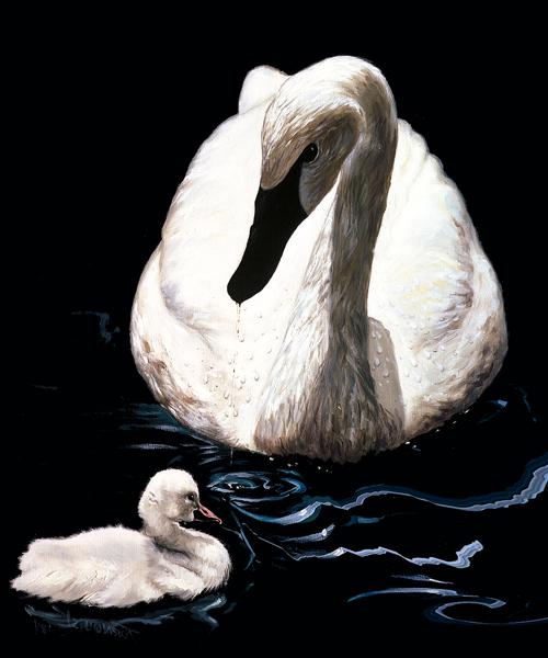 mother-swan-web