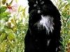 spookey-cat-sm1