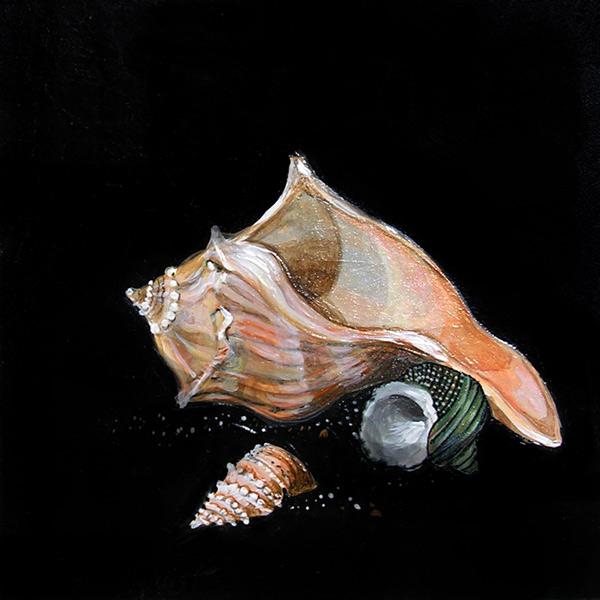 3-shells-12x12-100-dpi