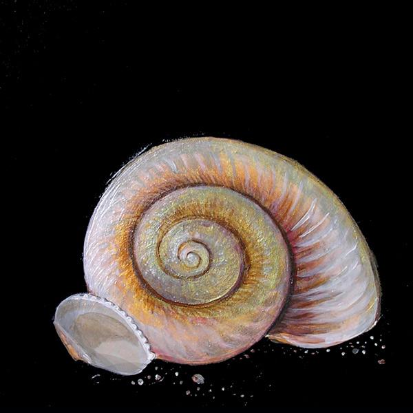 sea-shell-web