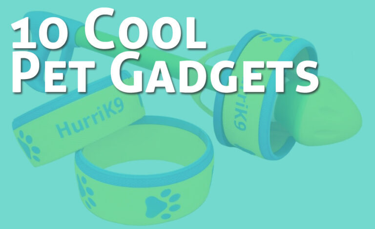 10 Cool Pet Gadgets and Toys You Will Love to Try Now