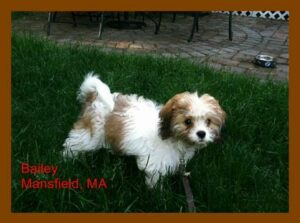 bailey cavachon monarchy family
