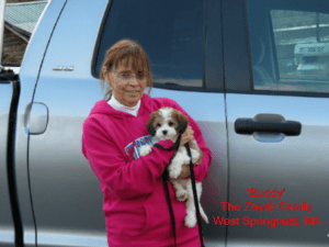 buddy monarchy cavachon puppy family
