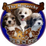 Cavachons from The Monarchy logo