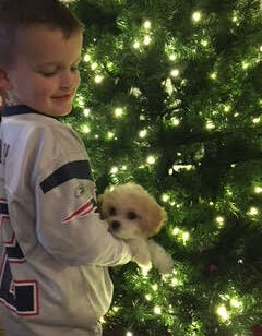cavachon puppy with boy