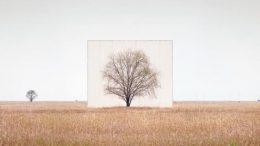 Tree in a field.
