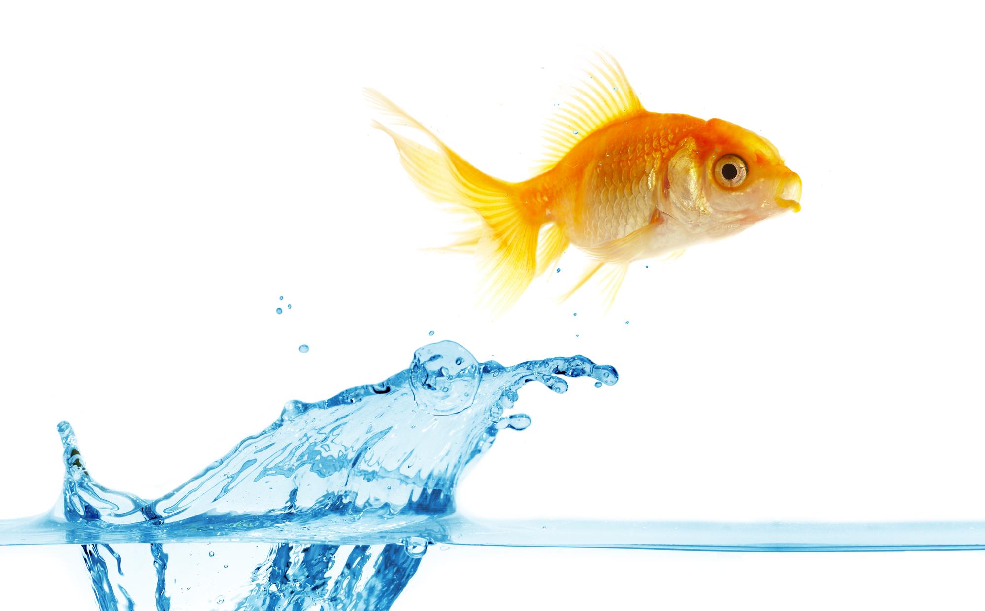 Goldfish Suicide Letter