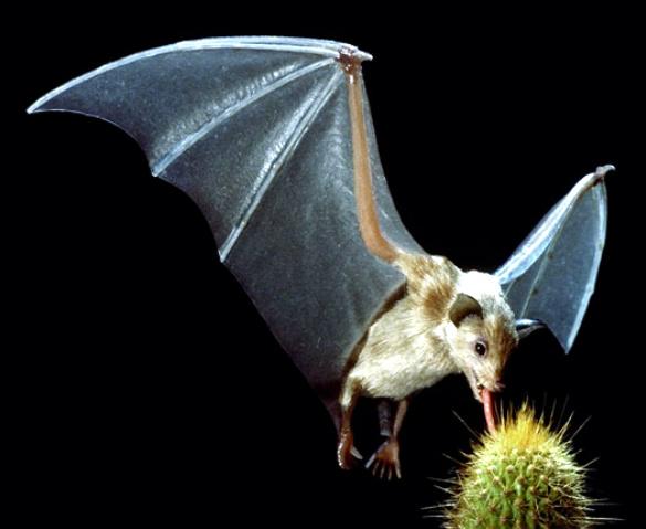 Bats, Our Misunderstood Neighbors: July 2015