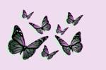 Pink Monarchs