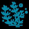 Outline of Algae icon.