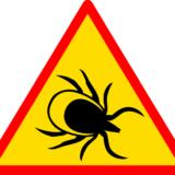 Acupuncture_for_Lyme_Disease_Treatment