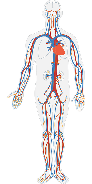 human-body-311864_640-2-1.png?time=1582181787