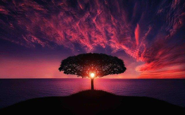 tree-736885_640.jpg?time=1594434307