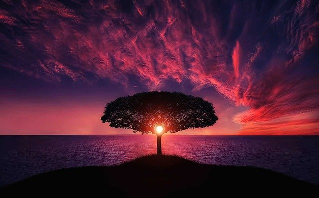 tree-736885_640.jpg?time=1618162587