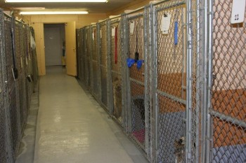 Dog Boarding facility Tucson