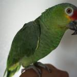 Birds Exotics and Reptiles Boarding