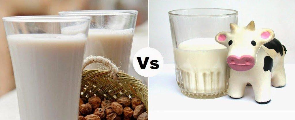 Porqué tomar leche vegetal y no leche de vaca pasteurizada