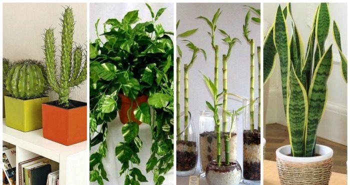 10 plantas que necesitas tener en casa