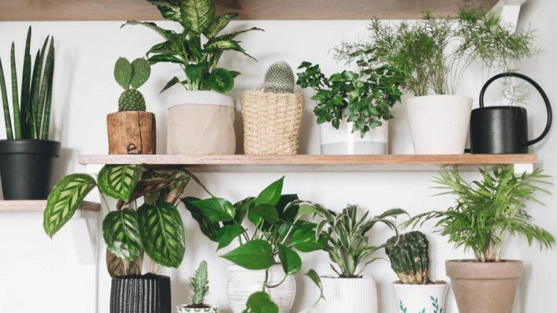 Plantas de interior para impulsar tu estado de ánimo en invierno