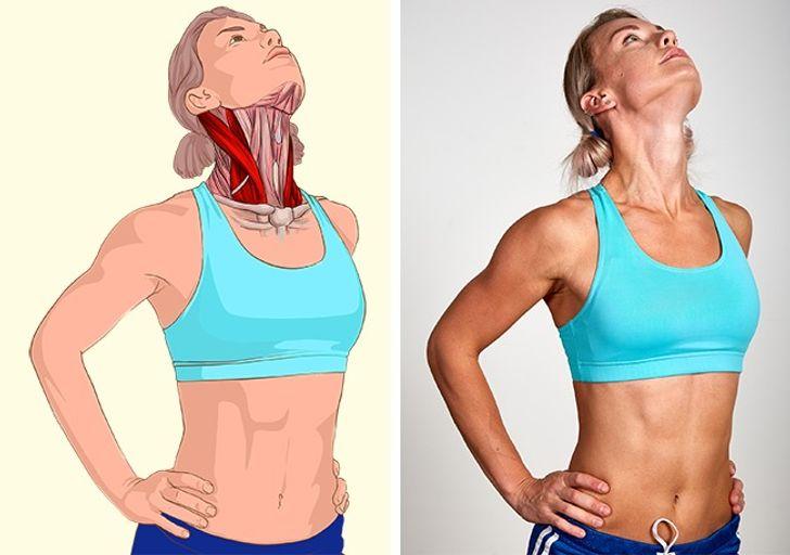 18 Ilustraciones que muestran claramente qué músculos estás estirando
