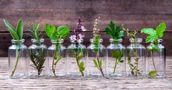 12 hierbas aromáticas para cultivar en agua todo el año