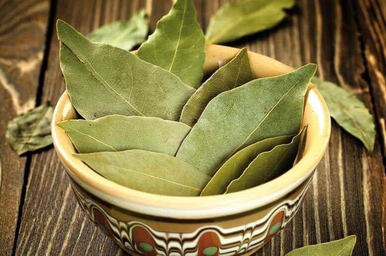 Usos de las hojas de laurel para tratar la diabetes