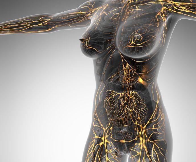 La salud del sistema linfático puede mejorar de esta manera