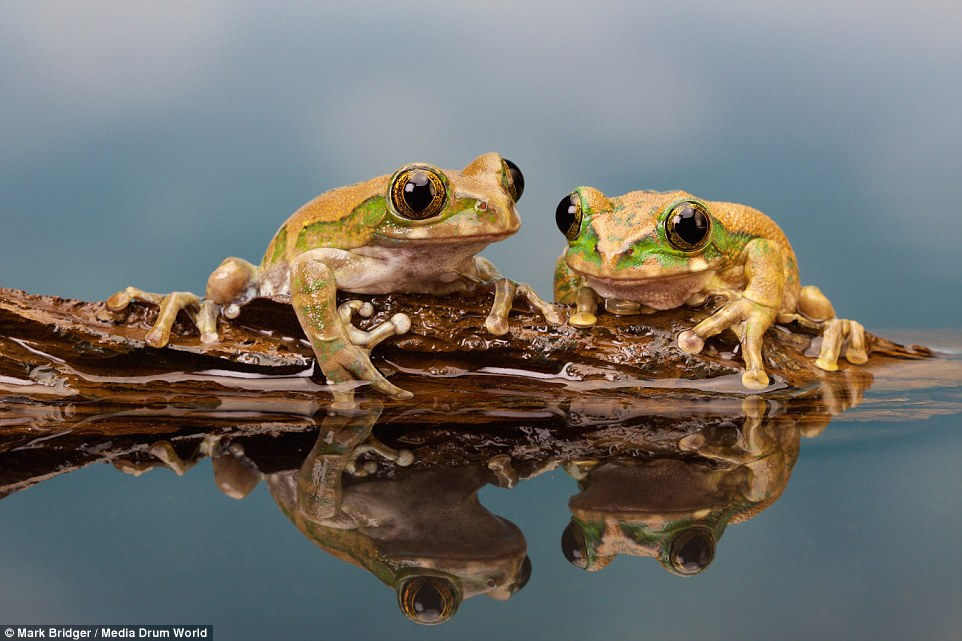Frogs on a log…