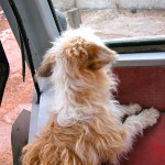 Esme' riding in the tractor
