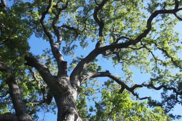 The Tree of Life: Vrikasana Pose