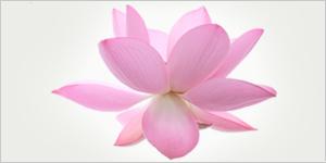 Emotional Balance and MindfulnessPractices
