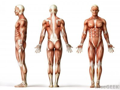 Living Upright in a Bent Society: Shoulder Posture Analysis