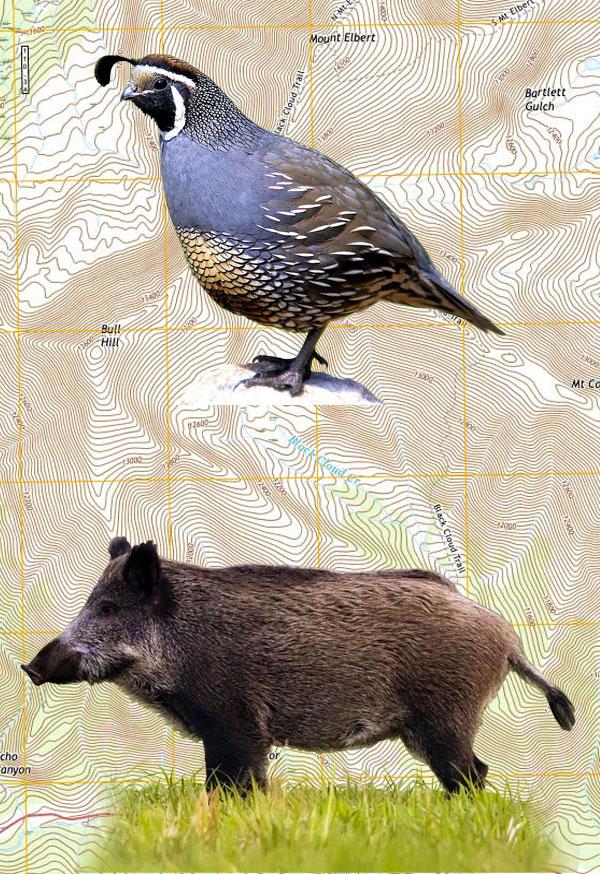 Upland Bird & Pig Combo Hunt