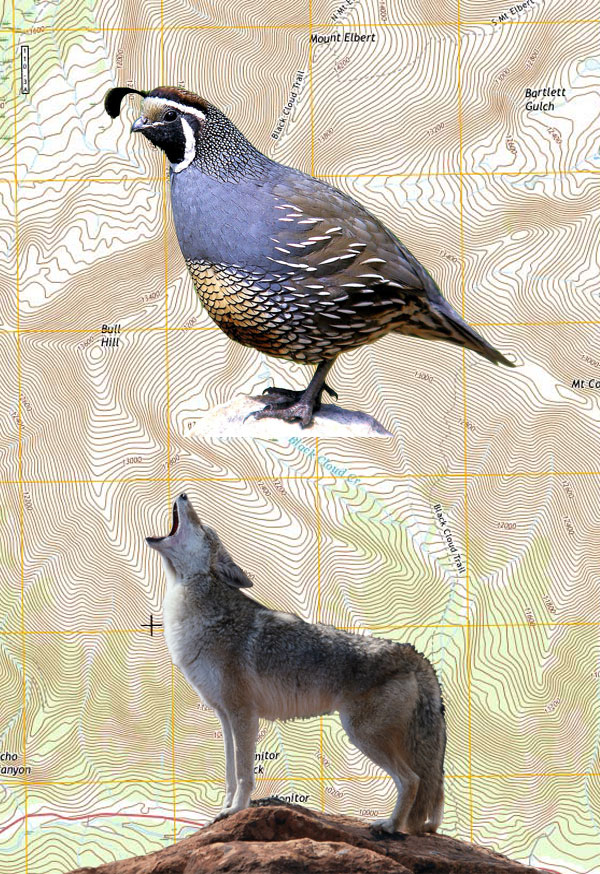 Bird & Varmint Combo Hunt
