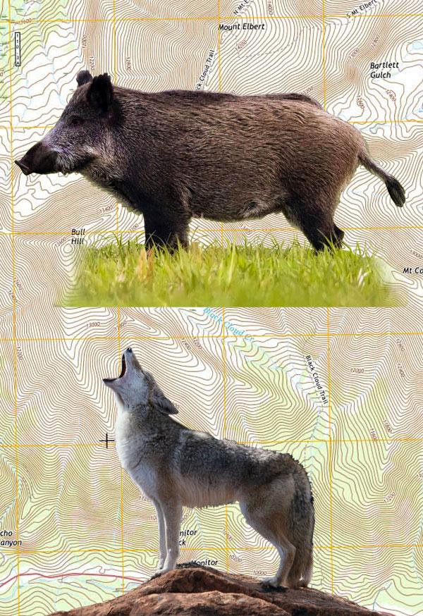 Pig & Varmint Combo Hunt