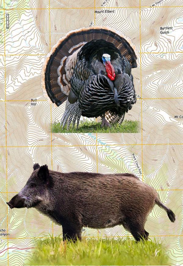 Turkey & Pig Combo Hunt