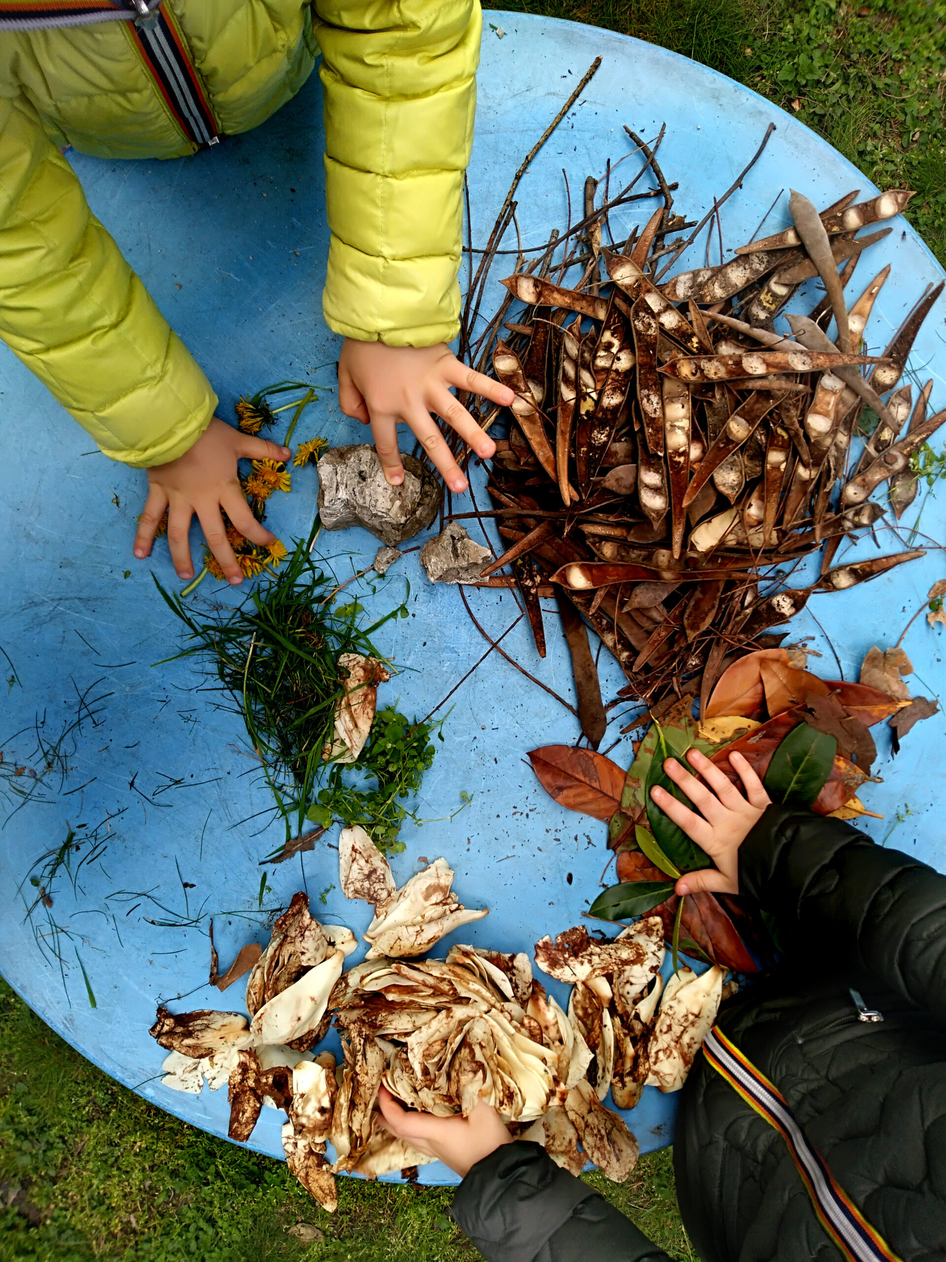 little children playing, expolring and gardening in the garden with soil, leaves, nuts, sticks, plants, seeds during a school activity - learning by doing, education and play in the nature concept.